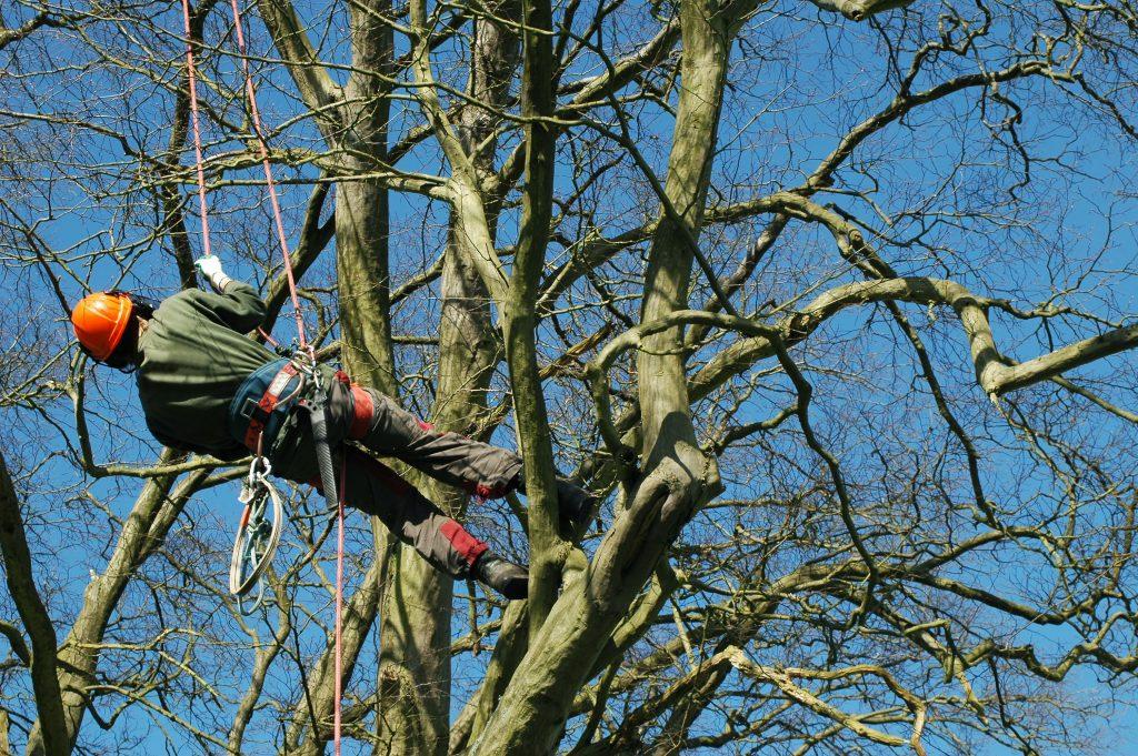 tree pruning Attleboro MA