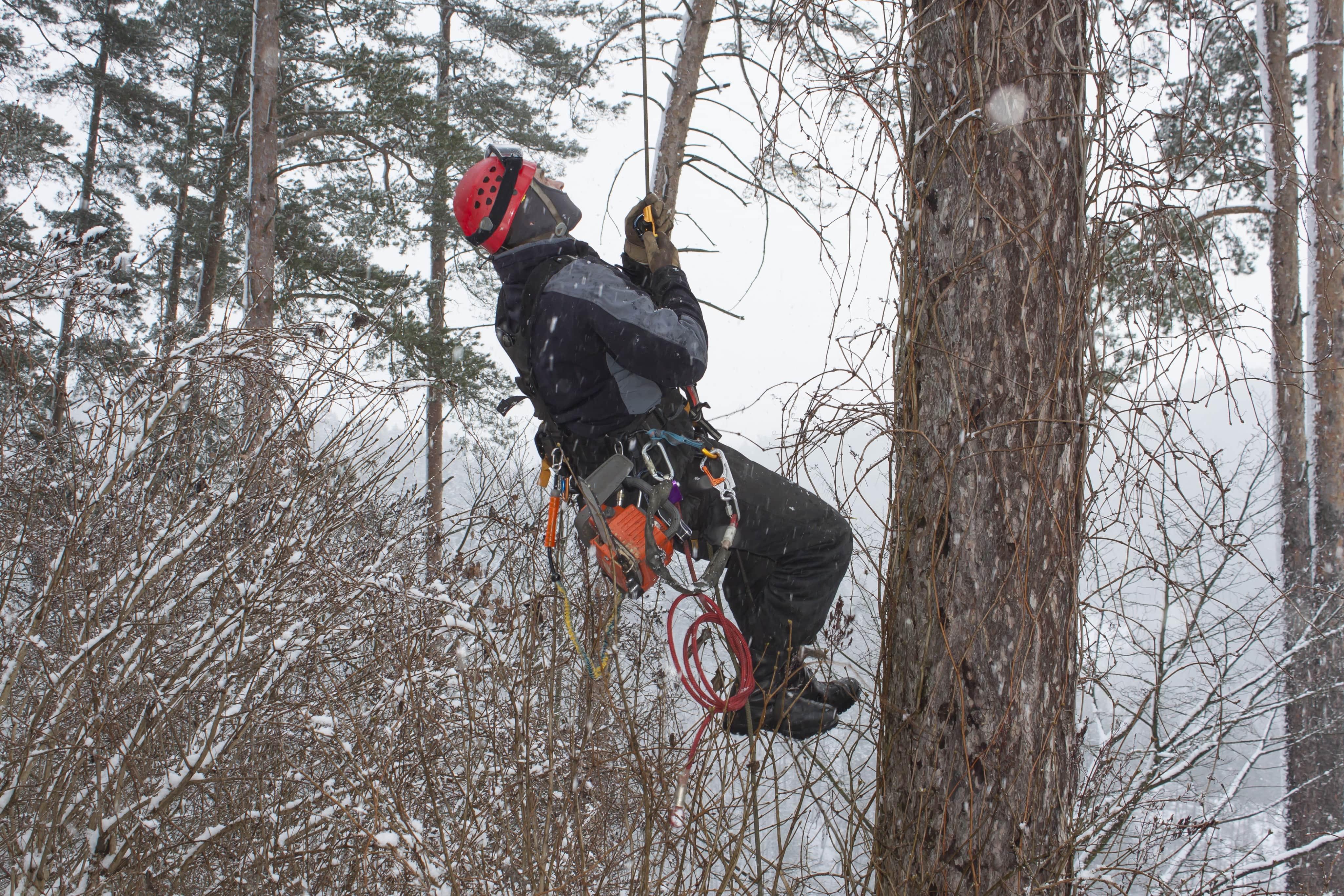 Arborist hanging from Tree in Snow