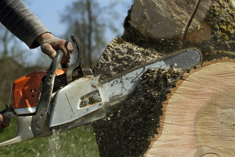 tree removal Attleboro