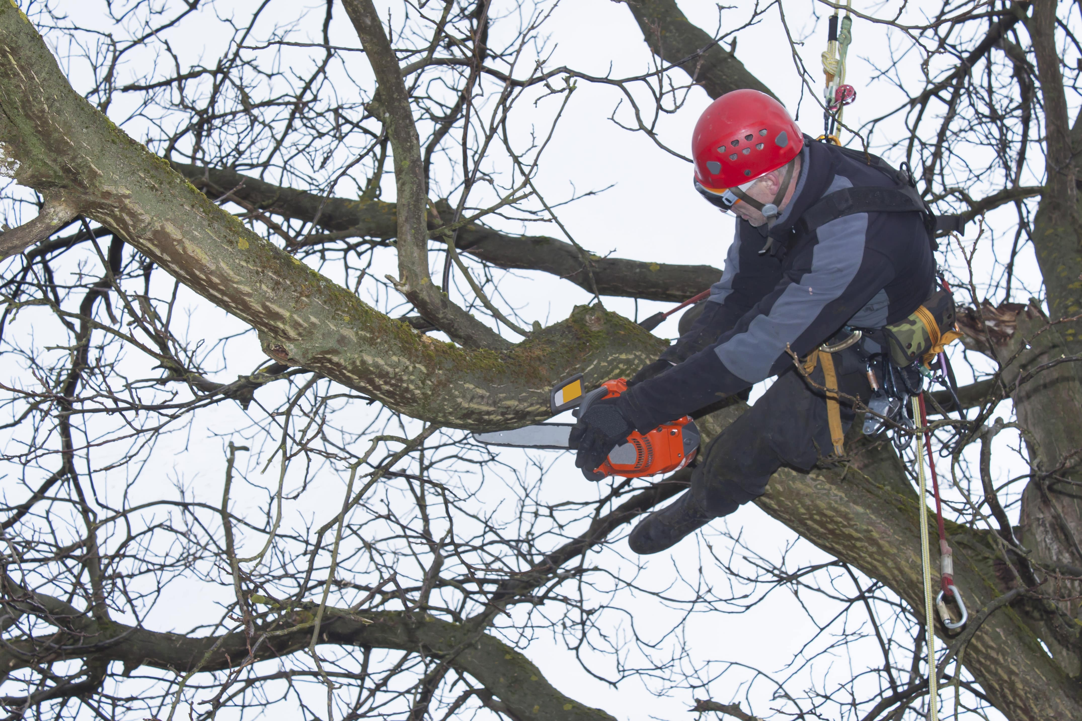Tree Service Pro Cutting Tree Branch in Downtown Attleboro, MA