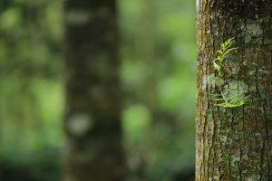 Attleboro Tree Service Pros