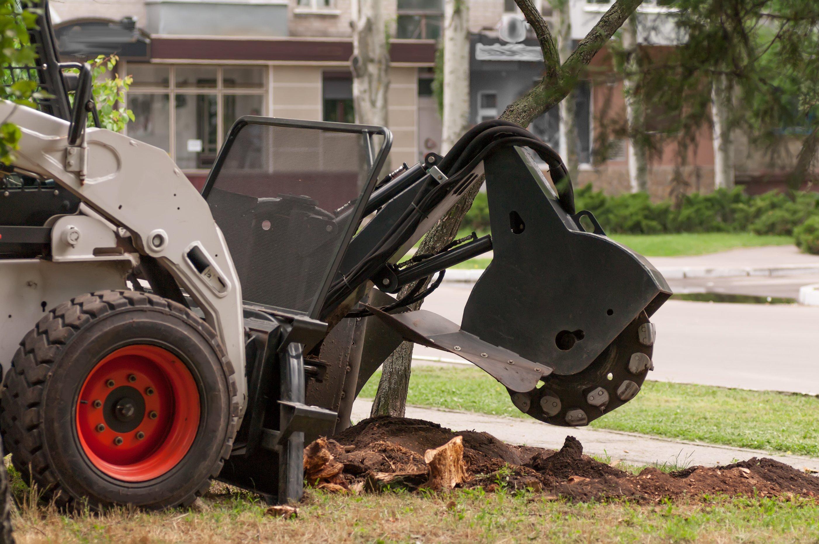 Tree Stump Grinding Attleboro Tree Service Pros