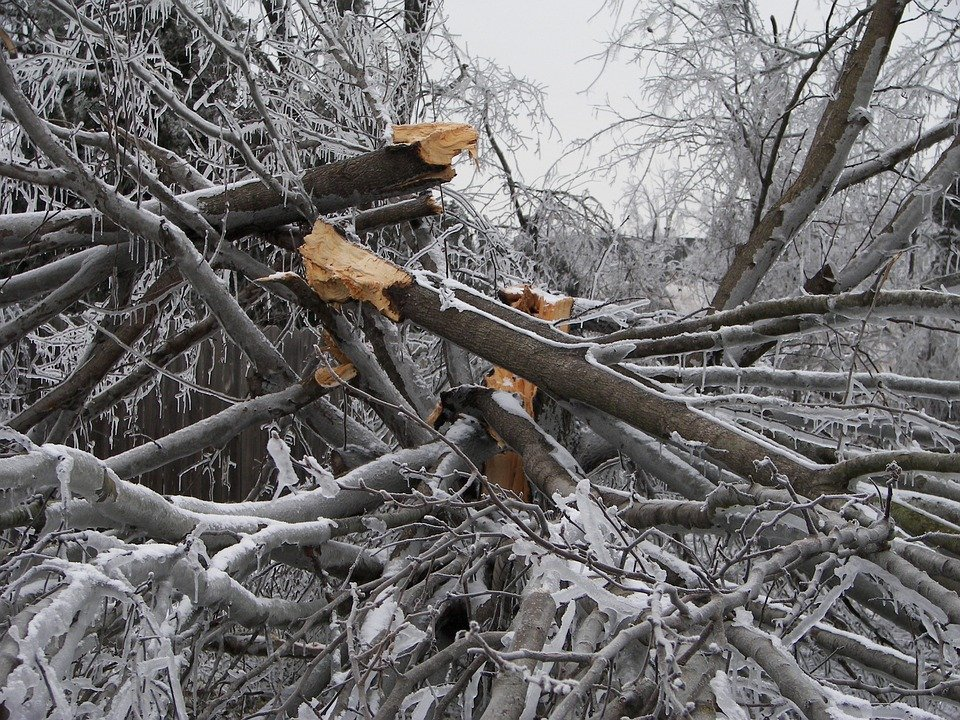 Tree destroyed in bad winter storm in Attleboro MA